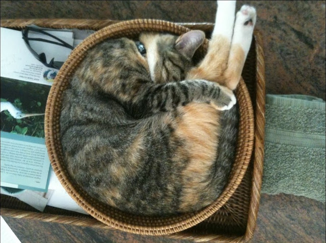funny sleeping cat, funny cat pictures, sleeping cat pictures, cat sleeps