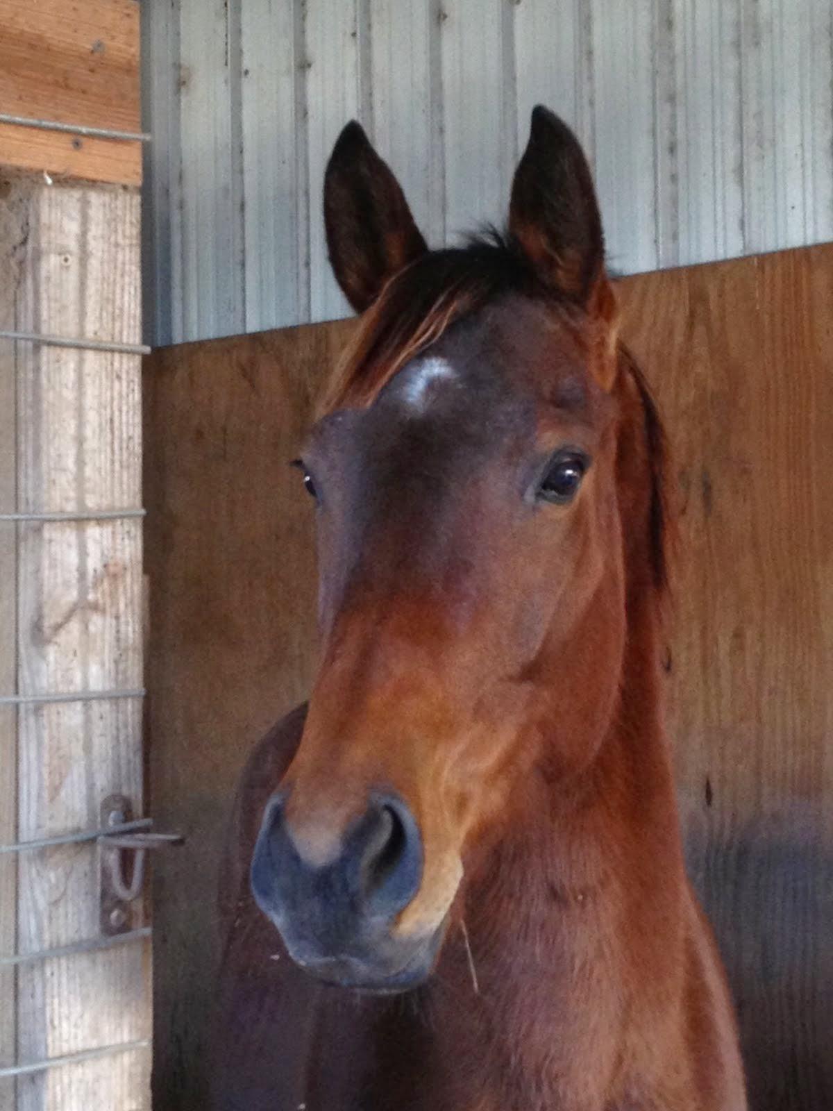 Scottie, 2009 Thoroughbred mare