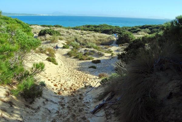 Dunas Punta Paloma. Baelo Claudia