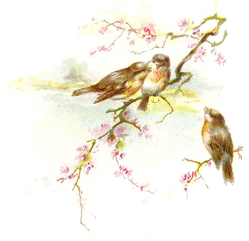Vintage bird clipart