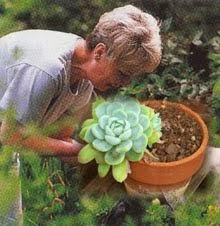 The Succulent and Cactus Lady