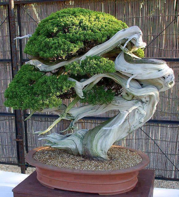 bonsai yang unik dan menarik