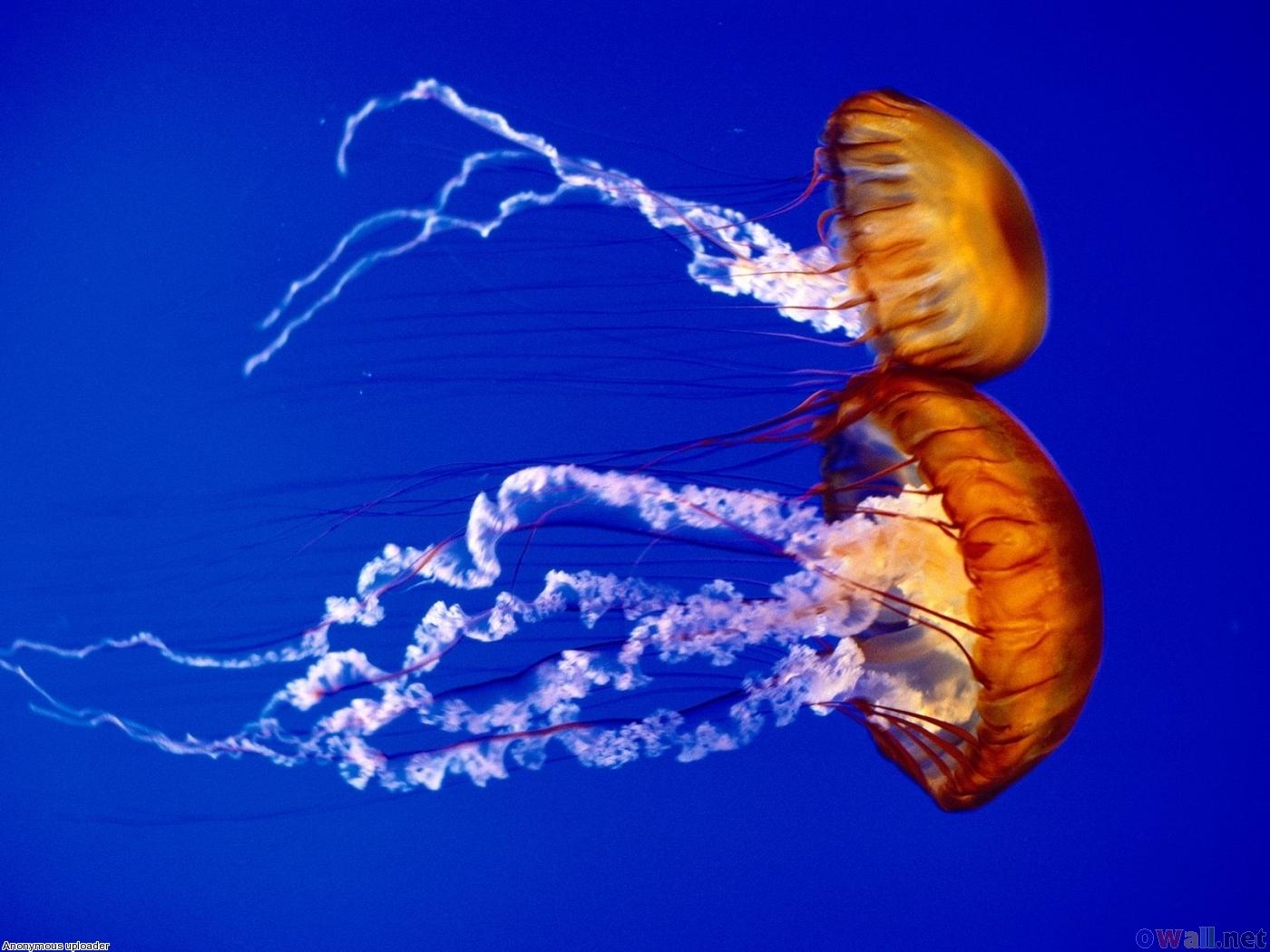 Die 10 coolsten Hintergrundbilder auf der Welt YouTube - Aquarium Hintergrundbilder Kostenlos