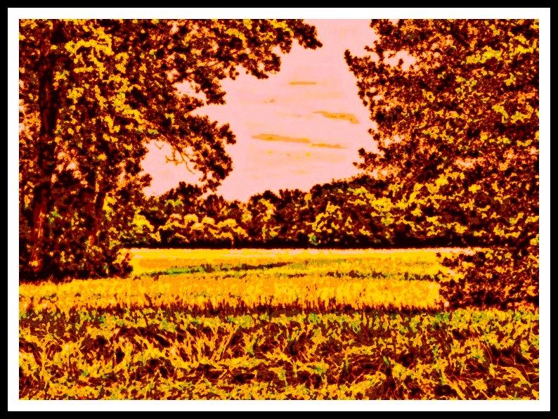 het uitzicht over het veld