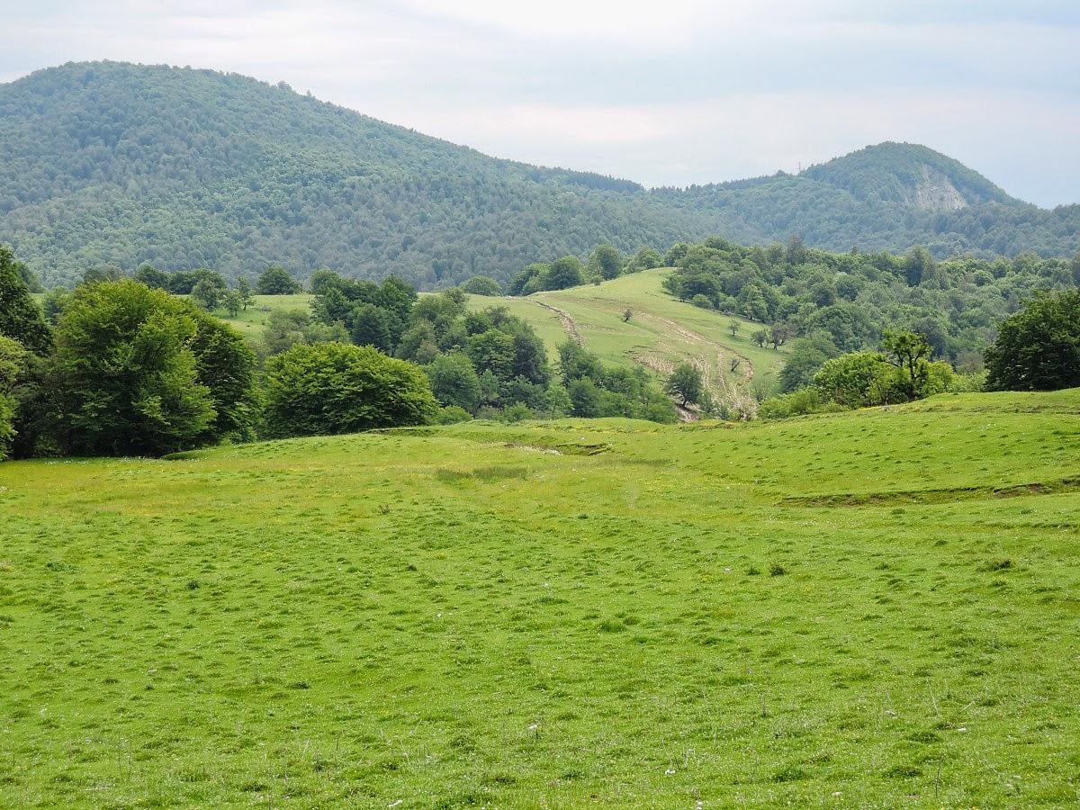 горные пастбища в Грузии
