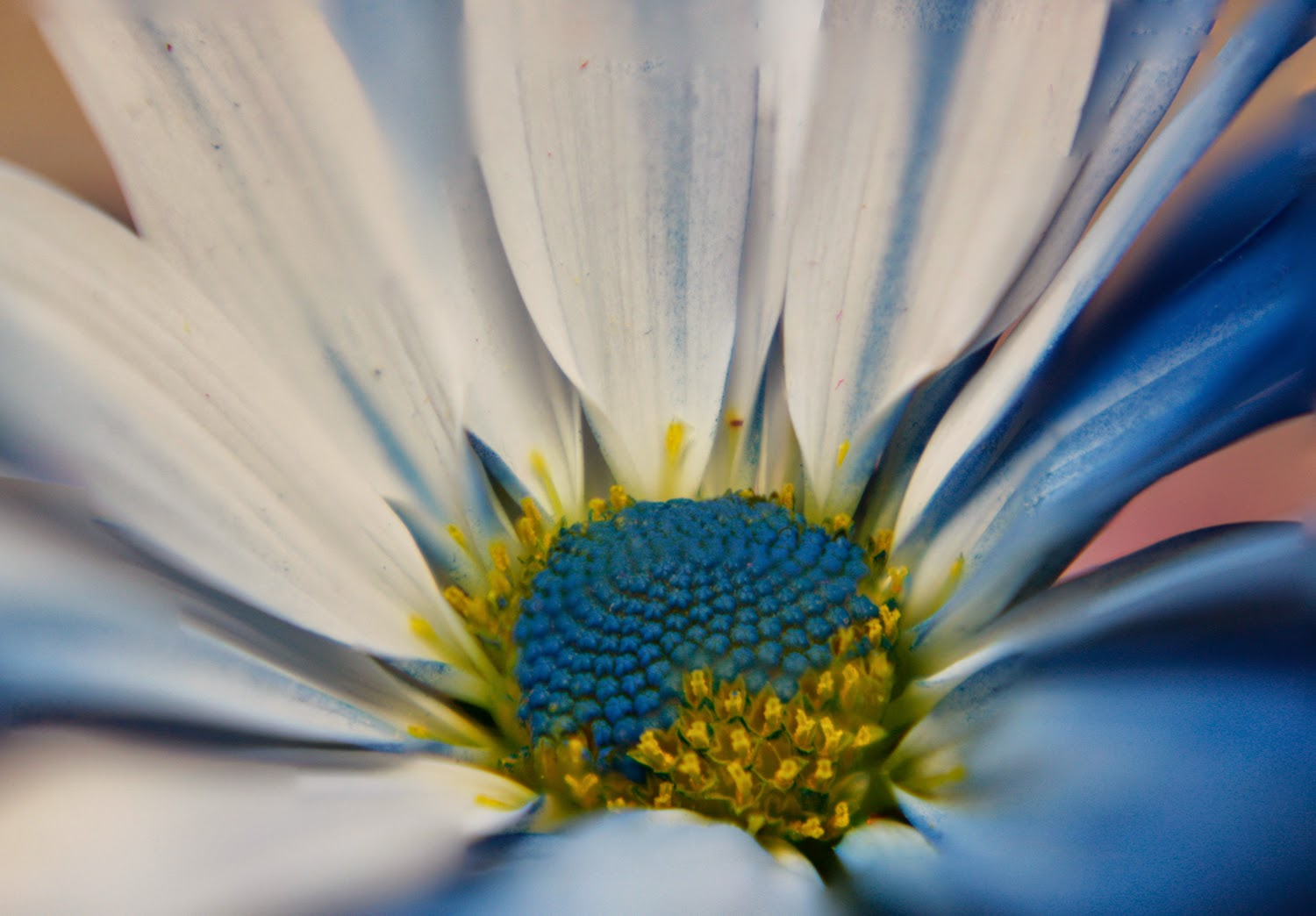 Focus Stacked Photograph of a Close-Up Flower | Boost Your Photography