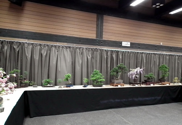 Spring Bonsai Show, Vandusen, Vancouver