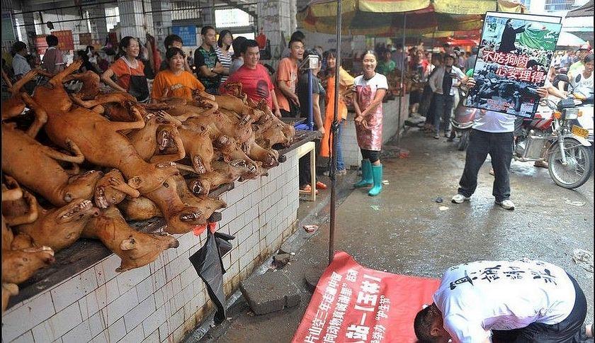 アメリカ「中国や韓国などは、犬や猫の肉の売買を止めろ!」 アジア諸国に要求 YouTube動画>6本 ->画像>51枚