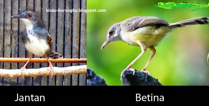 http://kicau-burungku.blogspot.com/