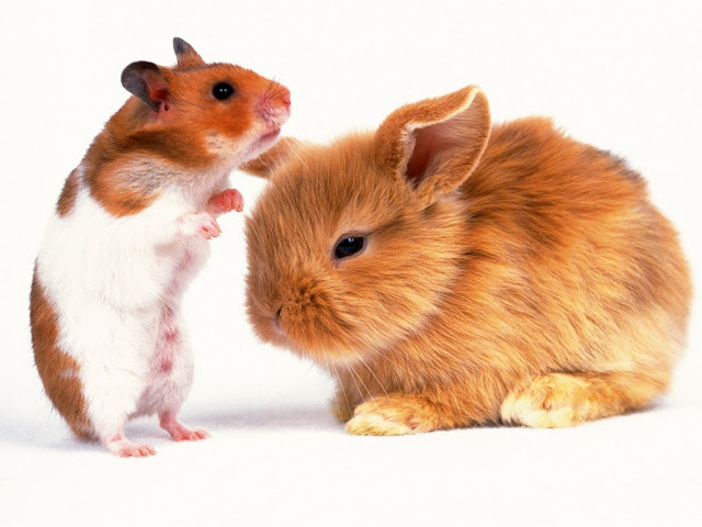 Hamster and rabbit
