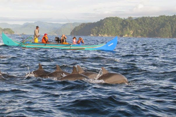 lumba-lumba teluk kiluan lampung