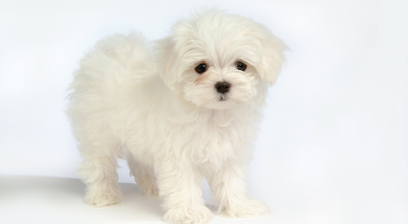 Best Very Cute Puppies Collections