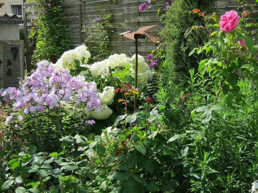 hortensie annabell rosa hortensie schneeballhortensie 39 pink annabelle 39 ballhortensie 39. Black Bedroom Furniture Sets. Home Design Ideas