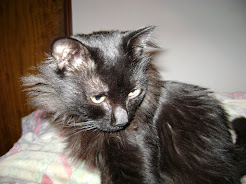 O gato mais gato do mundo!!! BOB FALCÃO