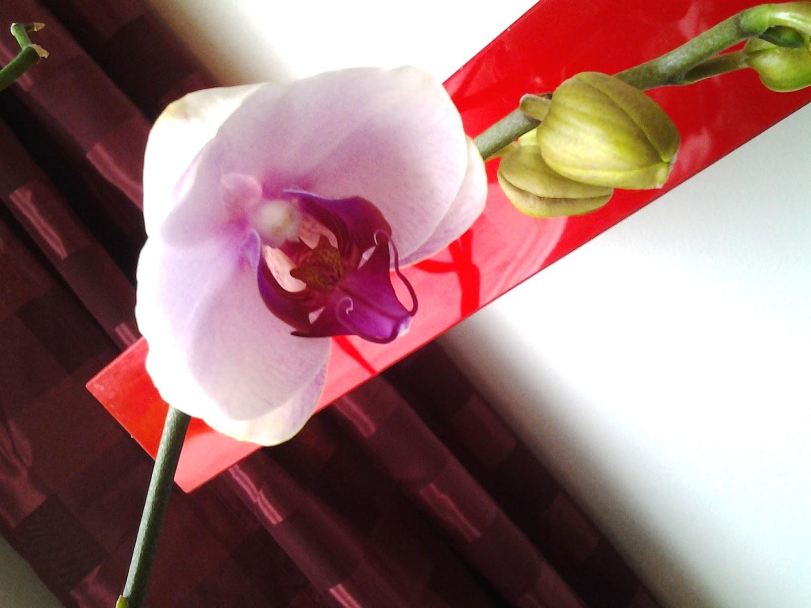 Orkideat netistä