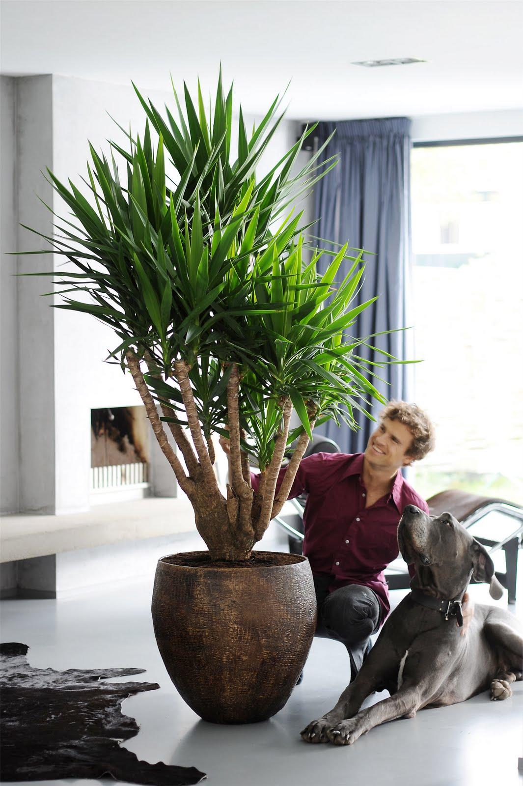 Planta del mes for Yuca planta de exterior