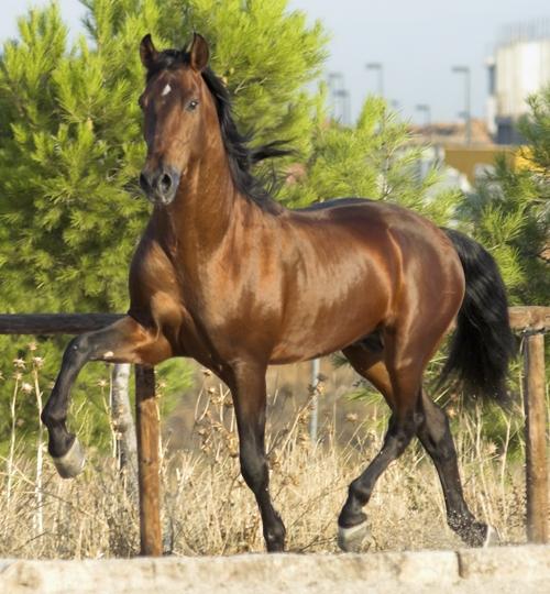 esteroides para caballos