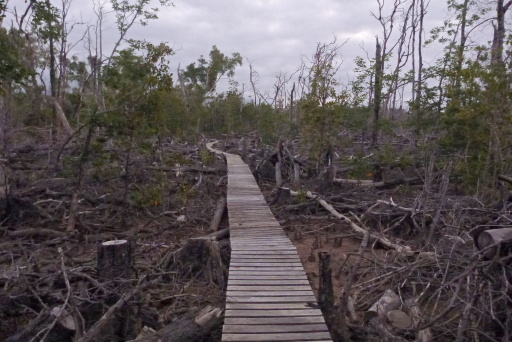 Queensland Coast: Environmental Damage from Cyclone Yasi
