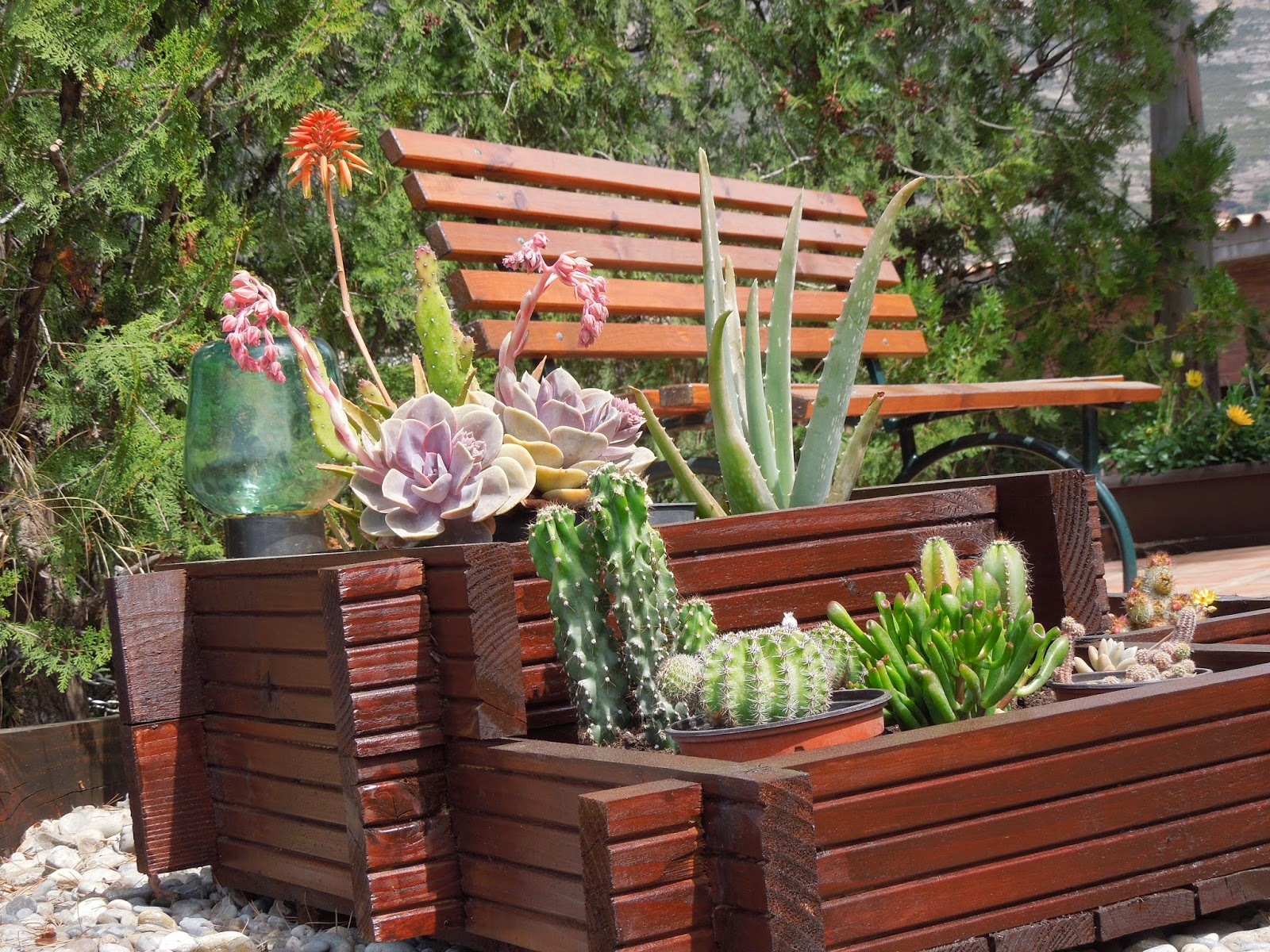 Rinc n para los cactus bot nic serrat for Cactus de exterior