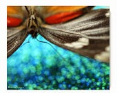 https://www.etsy.com/listing/72224032/butterfly-print-photograph-nature?ref=shop_home_active_19