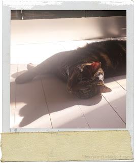 cat, wild tiger, prince