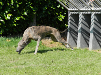 Le Greyhound
