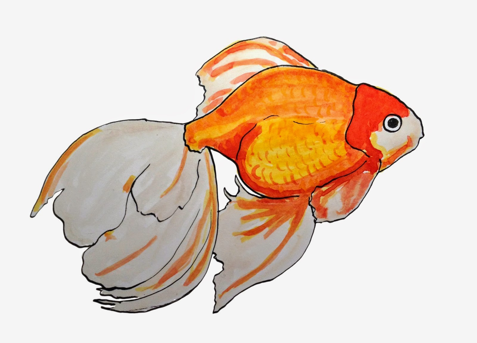drawing a day 79 goldfish watercolour