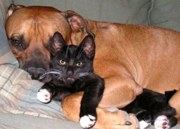 perros, dogs, cute dogs, perros bonitos, perros invasion propiedad, perros y gatos, cats and dogs, dogs and cats, puppies, mascotas, abrazos perro, manualidades faciles