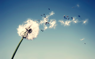 Flying Dandelions HD Wallpaper