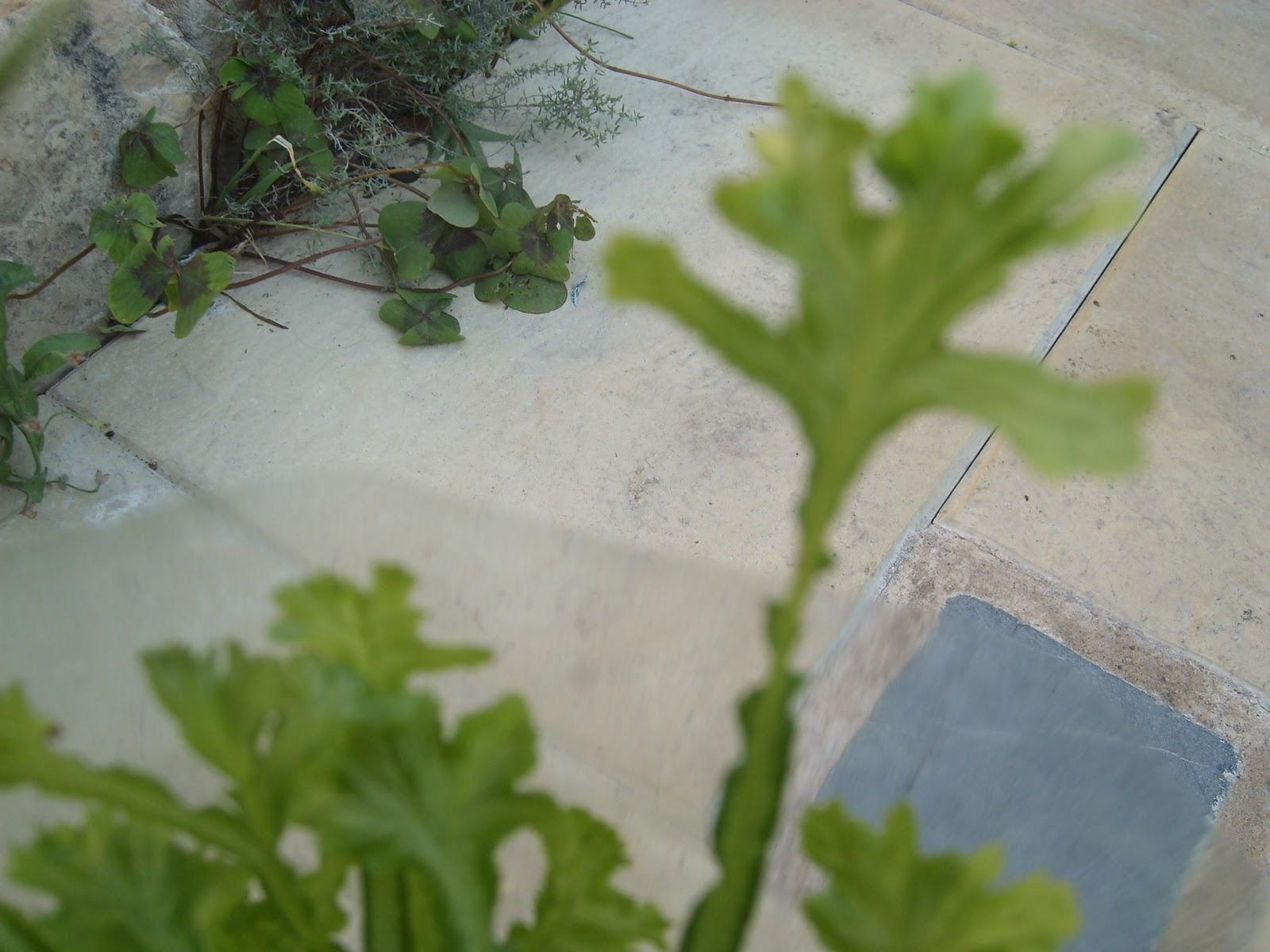 Le jardin de pascaline les plantes d 39 int rieur arrosage for Arrosage plante interieur