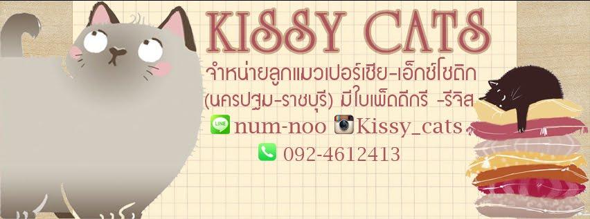บ้านแมว kissy cats