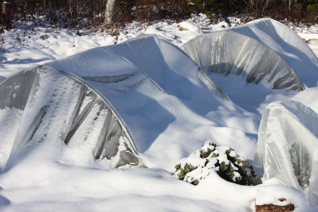 mini hoop tunnels in winter