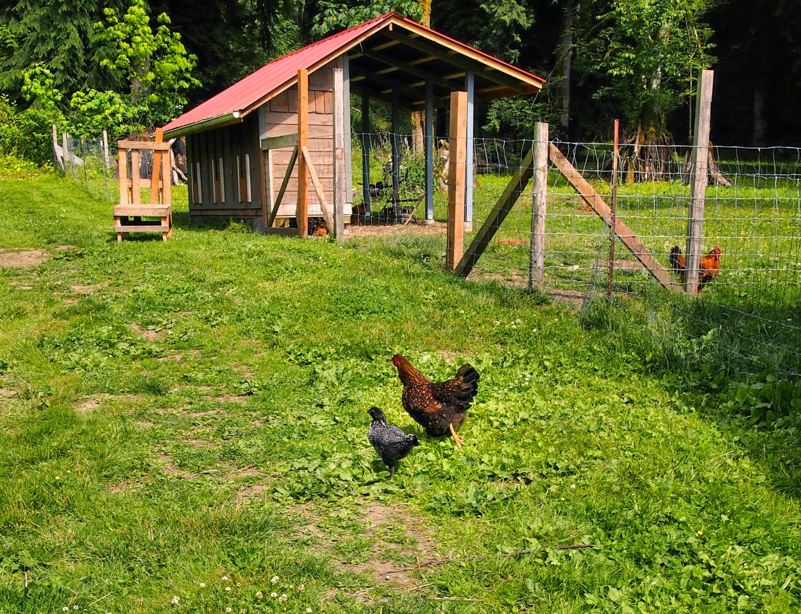 twisted fern farm chickens young goats old goats gardens and