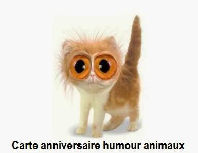 Carte Anniversaire Humour Animaux Texte Anniversaire Sms