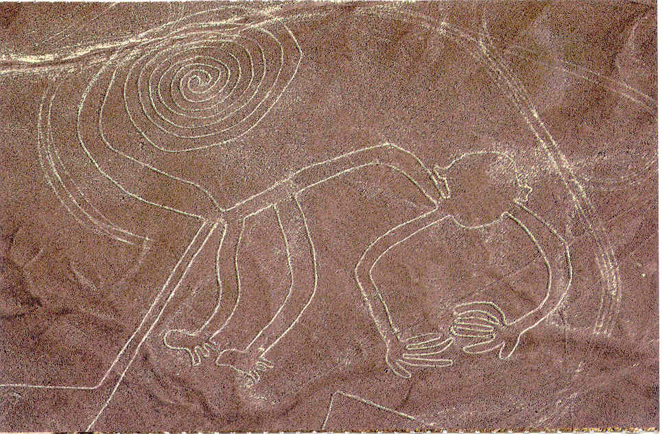 Line Drawing Of Desert Animals : World wondering: preview: the nazca lines