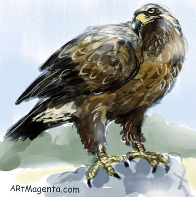 Golden Eagle  sketch painting. Bird art drawing by illustrator Artmagenta.