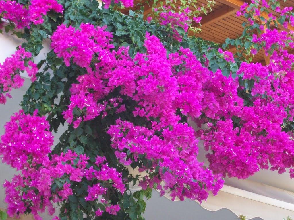 Μάϊος, μήνας λουλουδιών