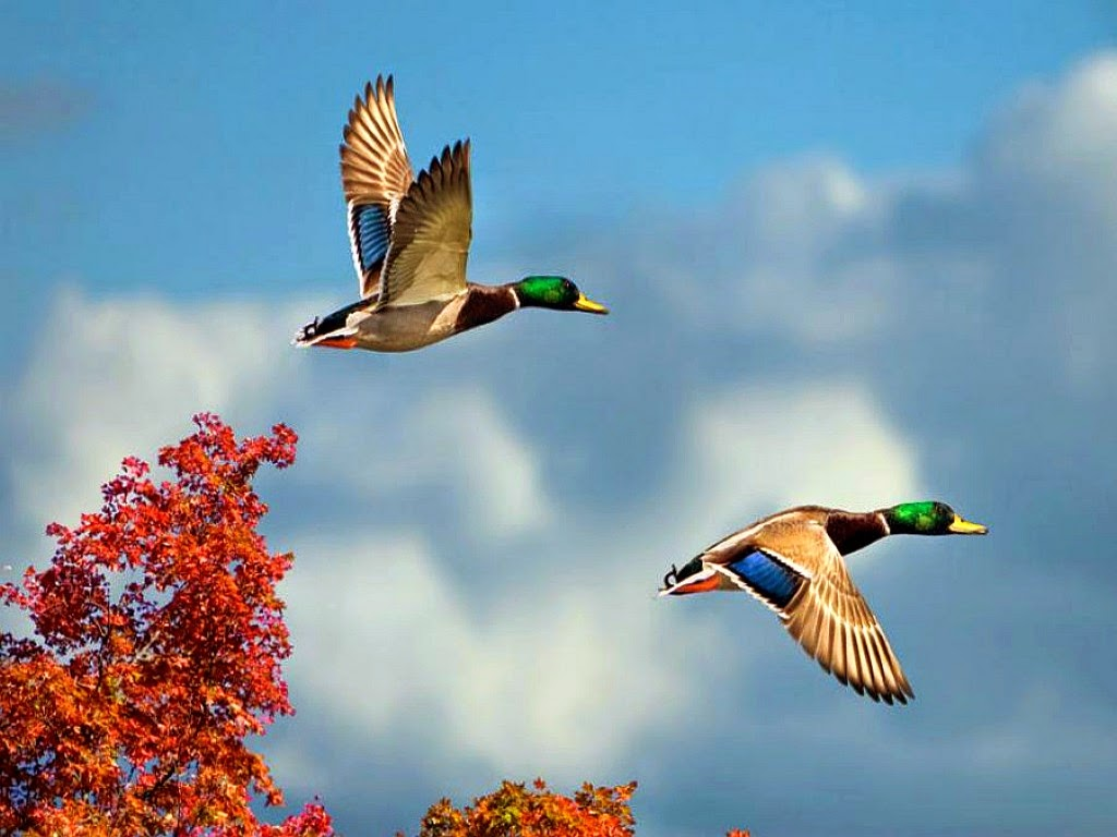 10 Most Beautiful Flying Birds New Hd Wallpapers 2014