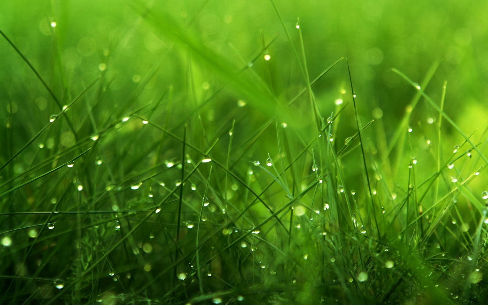 top 41 most beautiful and most dashing grass wallpapers in hd