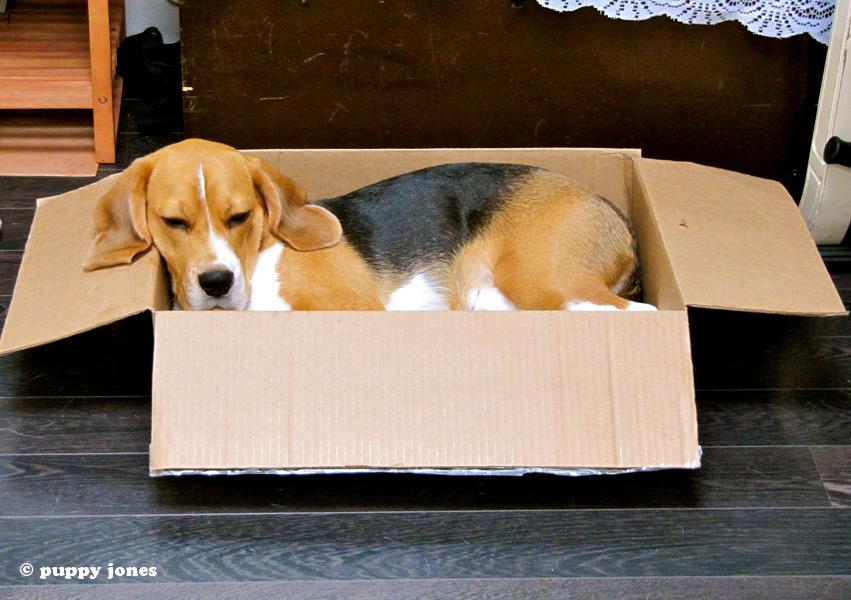 puppy jones dog blog