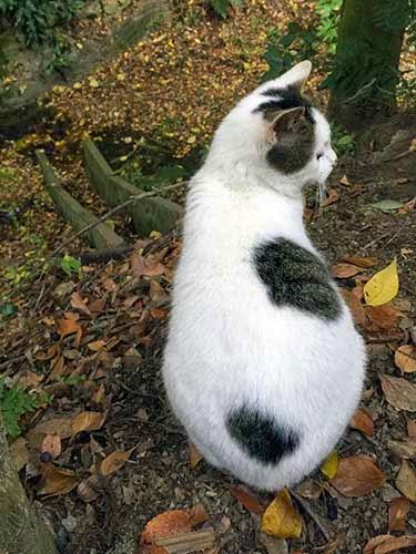 稲荷山の猫02