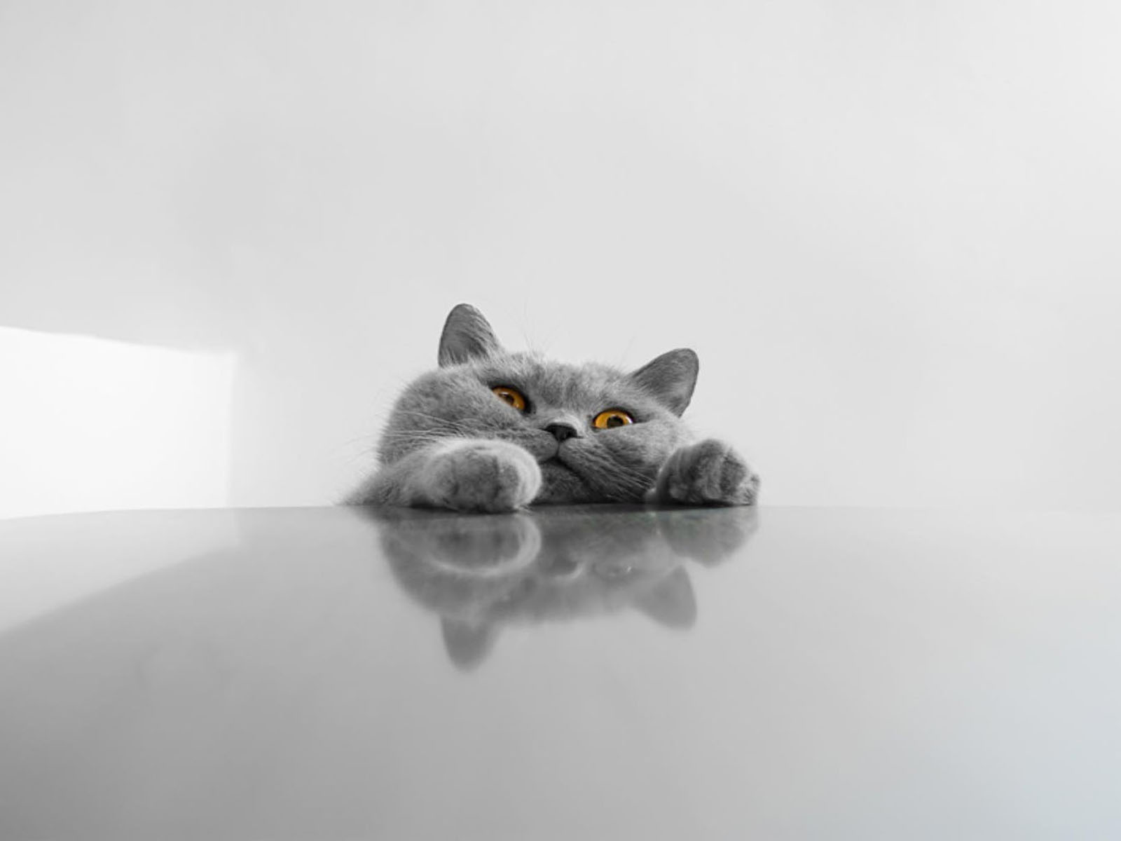 funny kittens wallpapers - photo #21