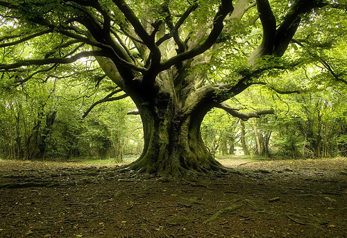 Ditemi com'e' un albero