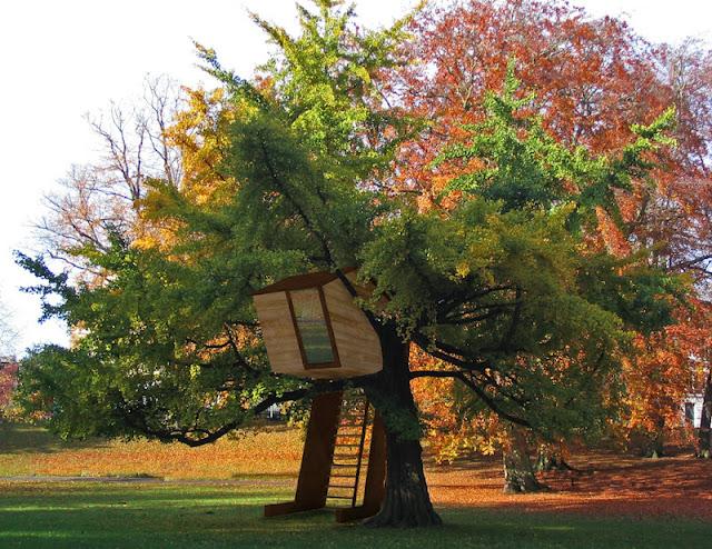 Casa na árvore inclui árvore