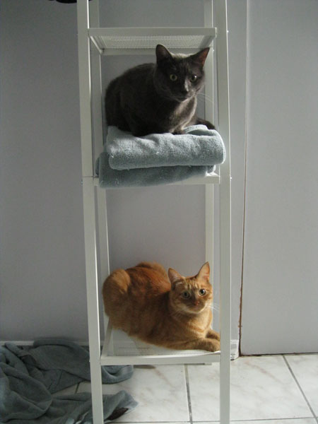 katia au pays des merveilles les chats les chats les chats. Black Bedroom Furniture Sets. Home Design Ideas