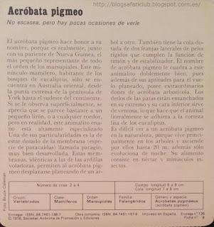 Blog Safari Club, características  del Acróbata pigmeo
