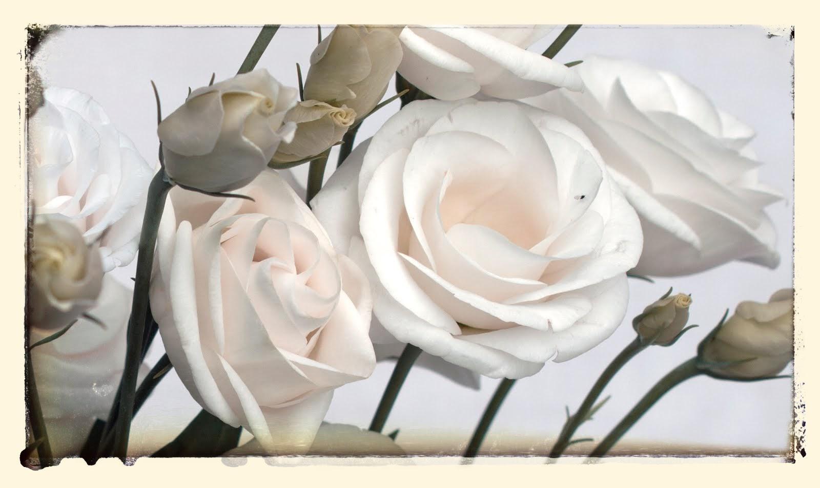 Las rosas. Rainer María Rilke