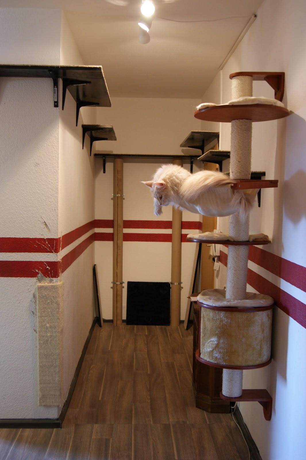 von engeln und teufeln catwalks denn deine katzen leben dreidimensional. Black Bedroom Furniture Sets. Home Design Ideas