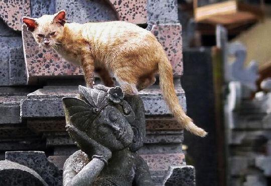 Cat from Ubud Bali