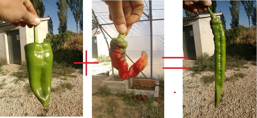 Mezcla 4 de variedades en La Regadera Verde